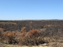 The trail of a bushfire (1)