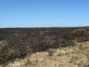 The trail of a bushfire (2)